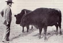 BuffaloJones